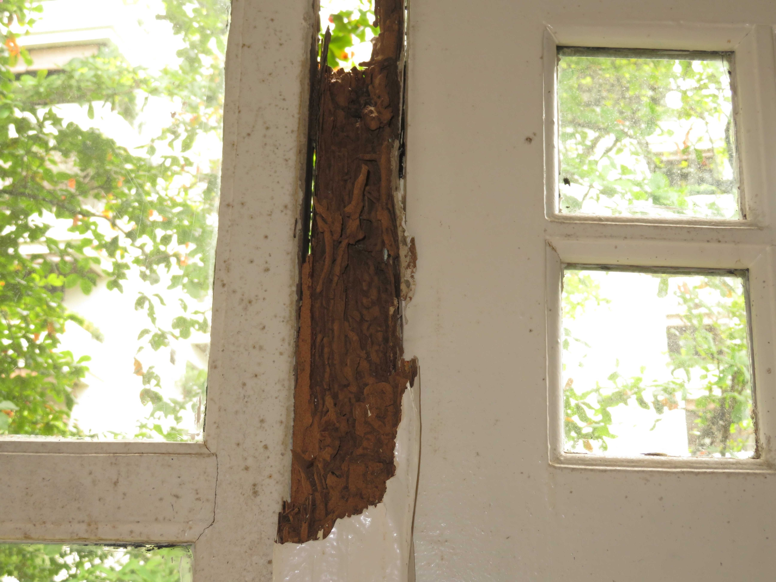 Wet rot and termite attack observed on window frame